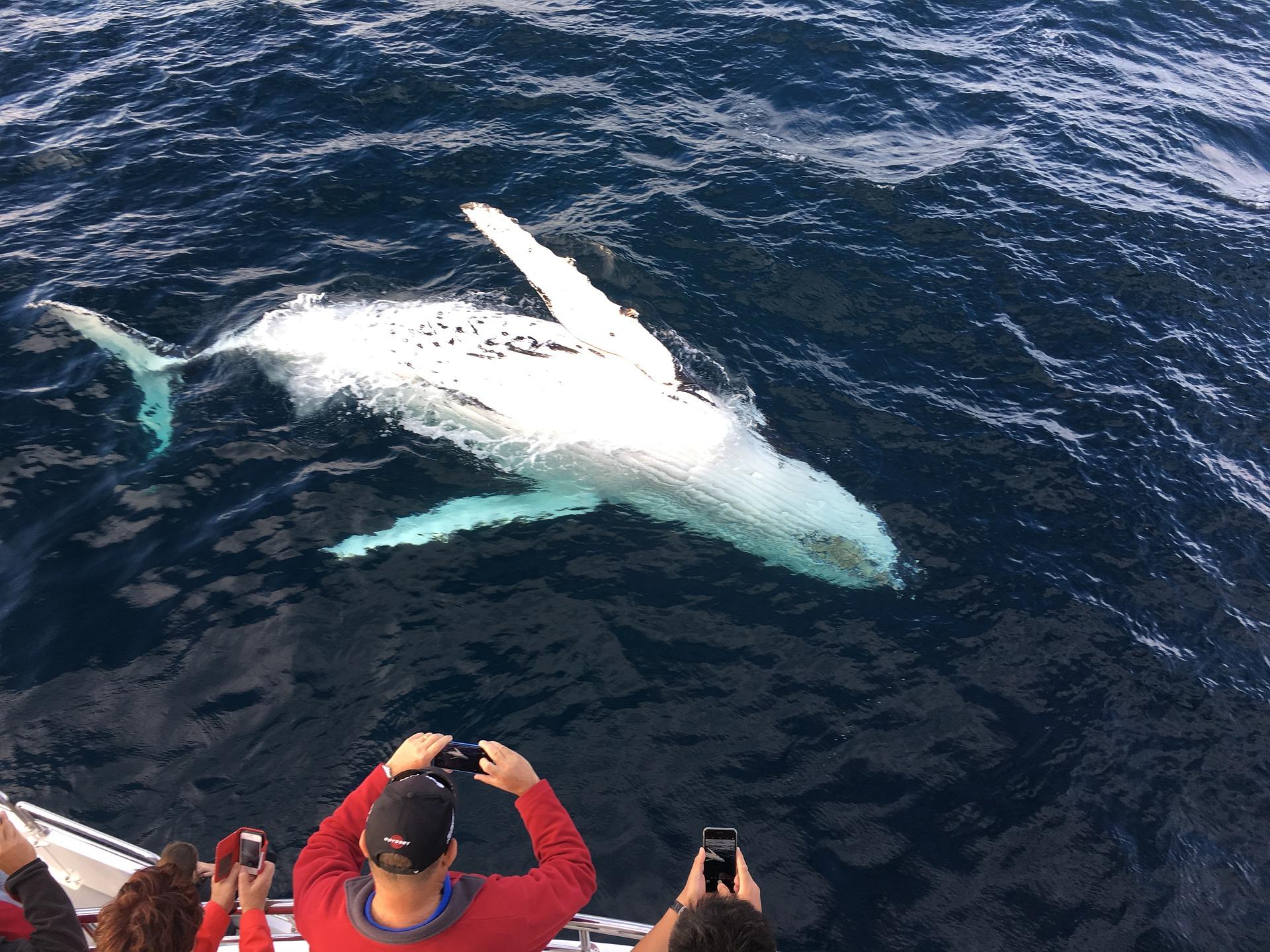 Walvissen spotten in Monterey