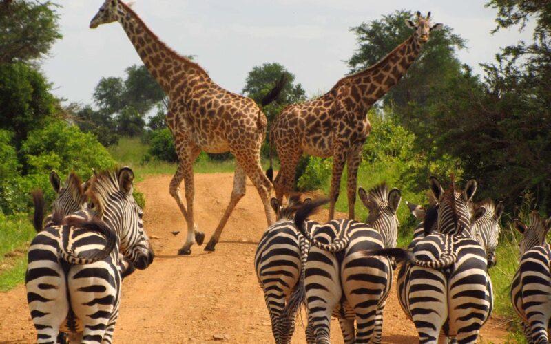 Waar Overnachten in Tanzania